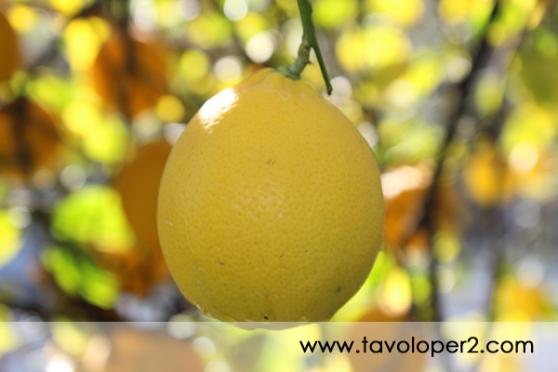 limoni-di-sorrento-tavolo-per-2