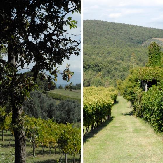 terre-del-principe-pallagrello-caserta-blog-di-cucina-valle-del-medio-volturno-castel-campagnano-enoturismo-campania