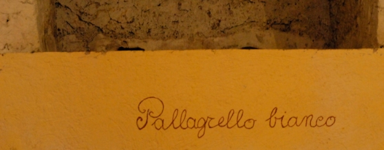 terre-del-principe-pallagrello-caserta-blog-di-cucina-valle-del-medio-volturno-castel-campagnano-enoturismo-tavoloper2